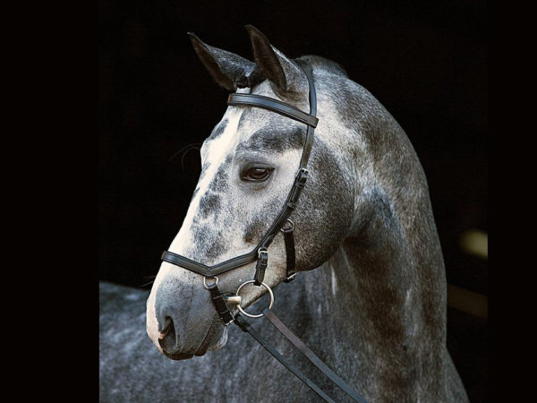 Reitsport Falkensee Online Shop Horseware Micklem Competition Bridle