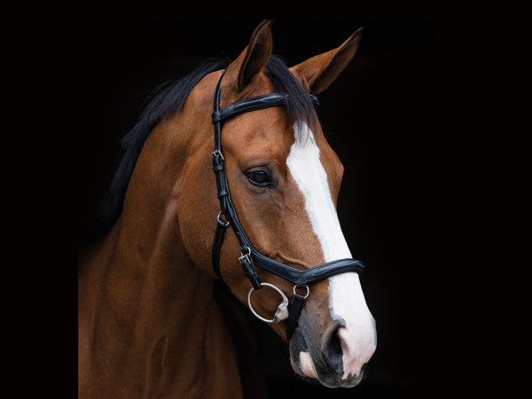 Reitsport Falkensee Online Shop Horseware Micklem Competition Bridle Deluxe