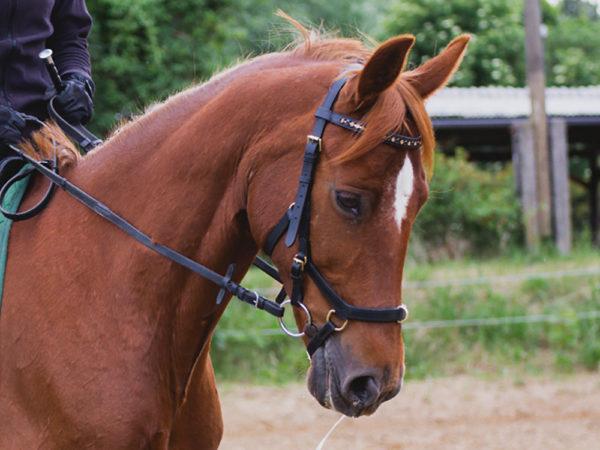Reitsport Falkensee Online Shop Horseware Micklem Multibridle Elli