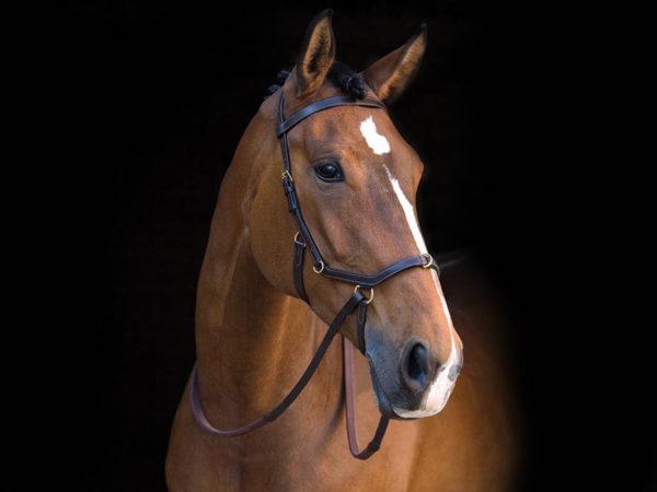 Reitsport Falkensee Online Shop Horseware Micklem Multibridle