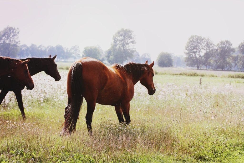 Pferdefütterung Vortrag Reitsport Falkensee
